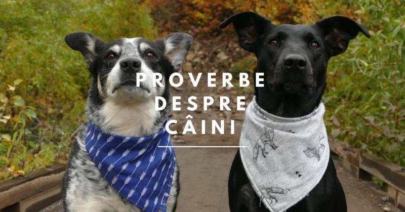 proverbe despre caini