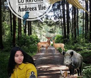 """Recenzie """"În armonie cu natura"""" de Andreea Ilie"""